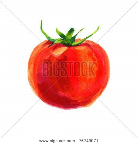 Watercolor Tomato On White Background
