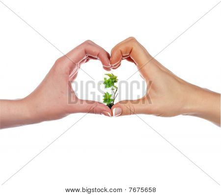 Green Sprout And Palm