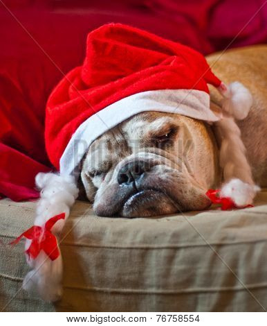 Bulldog Asleep After Christmas