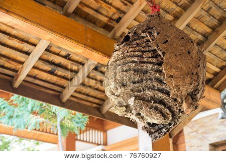 Big Wasp Nest
