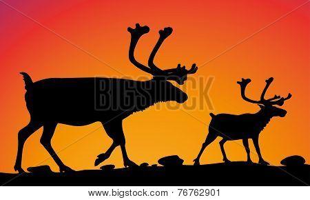 reindeers - vector silhouettes