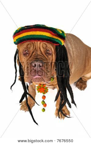 Rasta Doggy