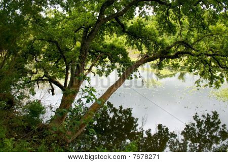 Tree Over River