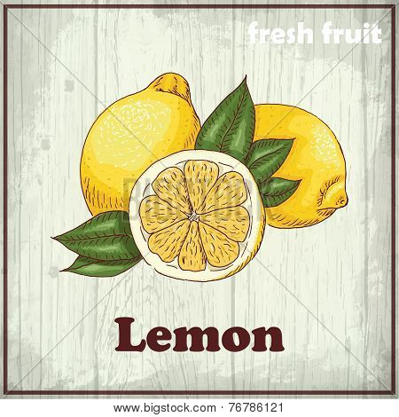 Fresh fruit sketch background. Vintage hand drawing illustration of a lemon