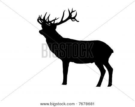 Deer in silhouette