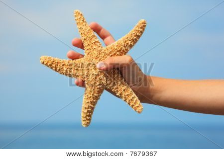 starfish in child's hand. focus on wrist.
