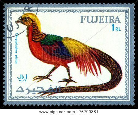 Vintage  Postage Stamp. Bird Chrysolophus Pictus.