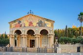 foto of gethsemane  - The Church of All Nations  - JPG