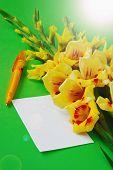 stock photo of gladiolus  - yellow gladiolus on a green background - JPG