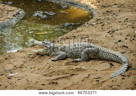 Crocodile Farm Near Chennai