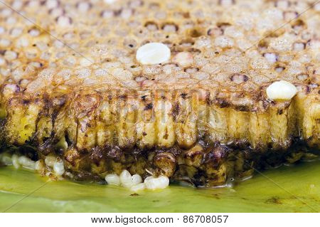 Roasted Immature Beehive On Banana Leaves