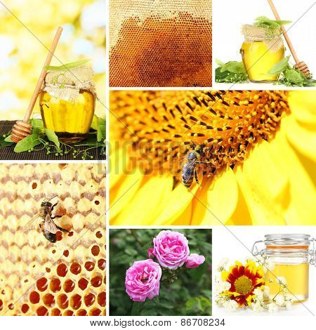 Beekeeping collage
