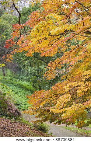 Detail Of Autumnal Tree