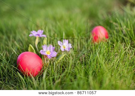Easter Hunt