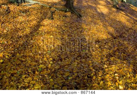 autumn colour lickey hills england