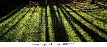 autumn colour lickey hills england