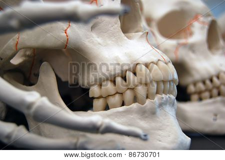 Boney Fingers Wrapped Around Skull