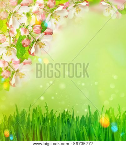 Blossoming Apple Tree And Green Grass With Light Leaks