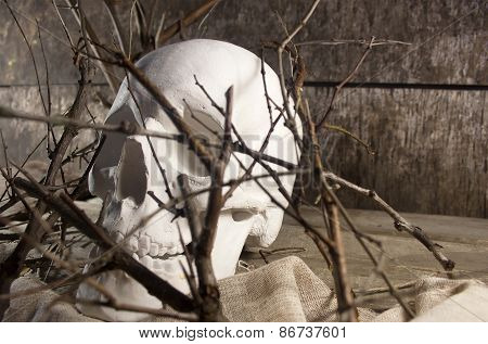 Skull and branches.