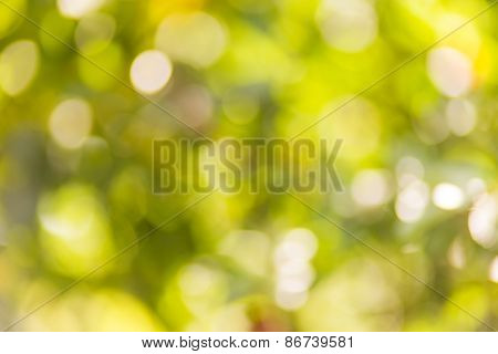 summer bokeh, beautiful bright background