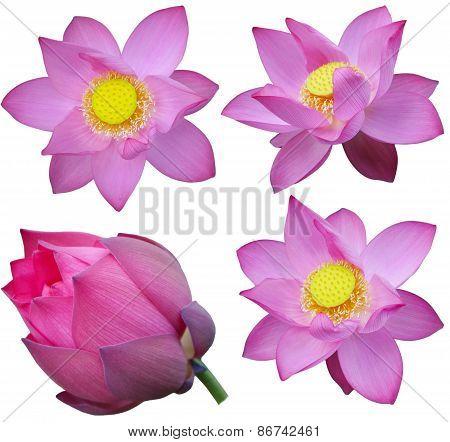 Pink Lotus Set