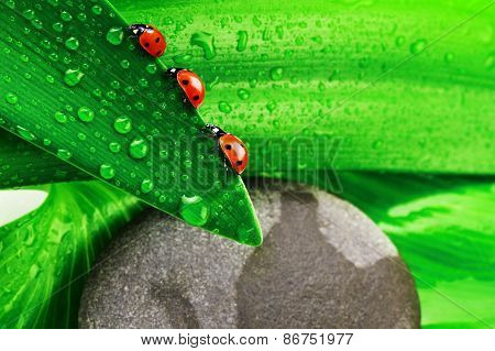 Green Leaf And Grey Stone