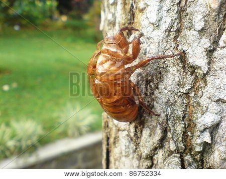 Cicada's Cocoon