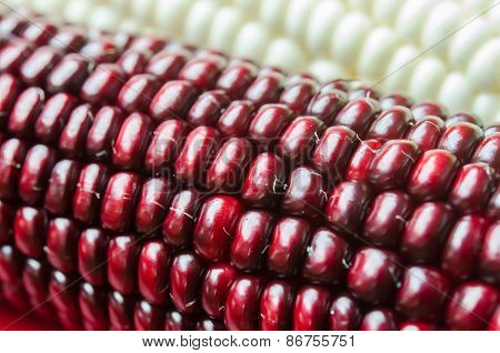 Corn Beans