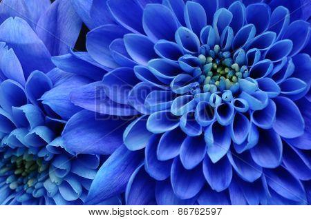 Close up of blue flower