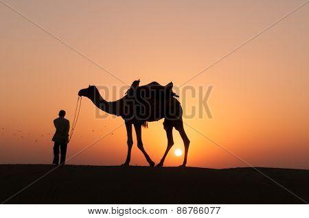 Silhouette Camel In Thar Desert