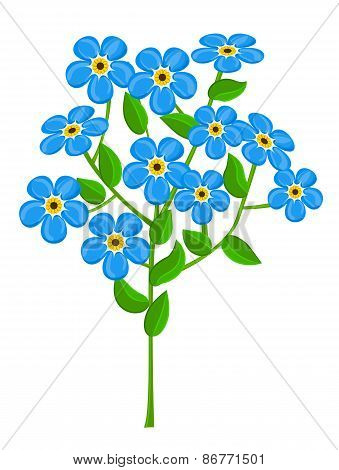 forget-me-nots isolated on white background