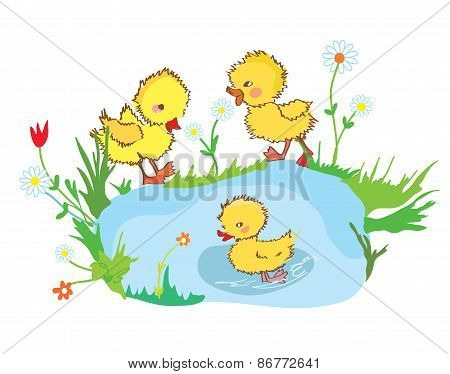 Funny ducks in the pond and flowers
