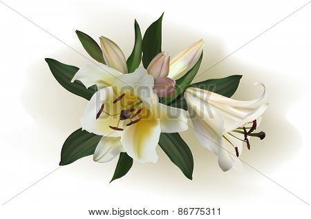 illustration with light lily flowers on light background