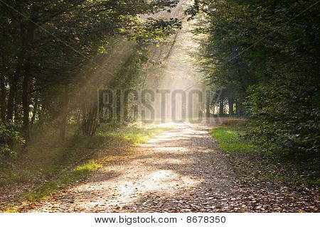 Rays Of Sunlight On The Path