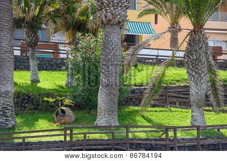 Bright Green Lawn Above Arena Beach On Tenerife Island, Canary.