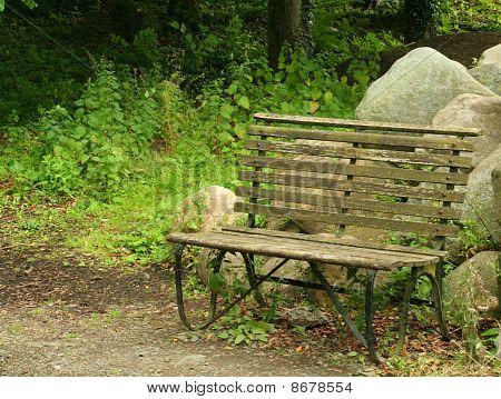 Seat in damp garden