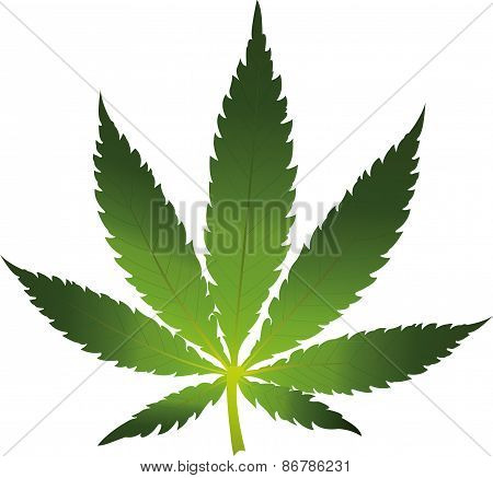 Cannabis leaf icon isolated