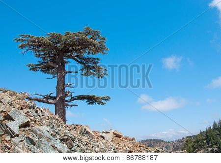 Lonely cedar tree in the mountains against blue sky.