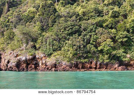 vibrant green vegetation