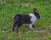 foto of cony  - View of bunny in the tuscany countryside  - JPG