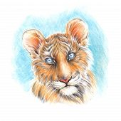 picture of cute tiger  - Handmade painting colored pencils head cute tiger cub on a light blue background - JPG