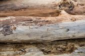 picture of driftwood  - Three light - JPG