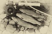 stock photo of trout fishing  - Three wild trout with fishing fly reel landing net and assorted flies on wet river bed stones with vintage concept - JPG