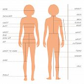 picture of measuring height  - vector body measurements size chart - JPG