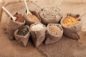 picture of sesame seed  - Row healthy grain food (corn sesame flax buckwheat wheat pumpkin seeds sunflower seeds ) in jute sack with wooden spoon