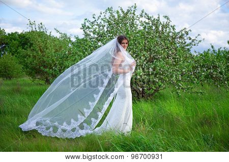 Portrait Of Pretty Woman In Wedding Dress With Veil In Blooming Summer Garden