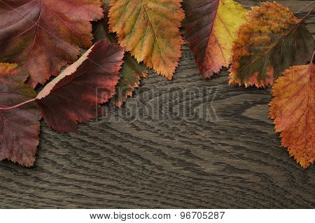 autumn hawthorn leaves directly from above