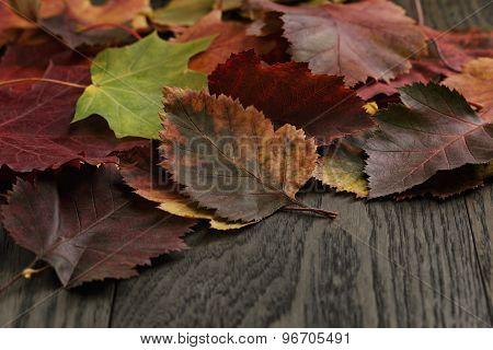 autumn hawthorn leaves on old table