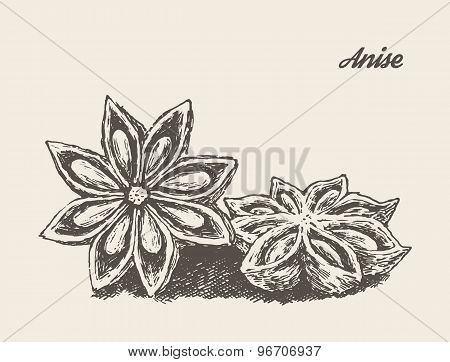 Anise vintage vector illustration engraved sketch
