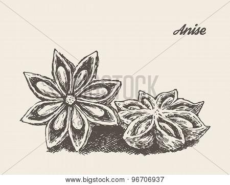 Anise vintage vector illustration engraved sketch
